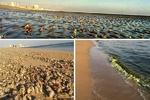 مرگ بیصدای صدفها در سواحل خلیج فارس