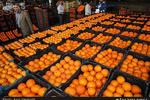 بیخبری برخی مسئولان از وضعیت بازار/پرتقالهای داخل یا گرانند یا بیکیفیت