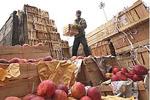 آذربایجانغربی وتهران زنجیره مشترک صادرات سیب درختی تشکیل می دهند
