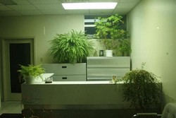 کراپ شده-گیاه آپارتمانی