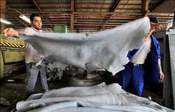 صادرات پشم دباغیشده آزاد شد