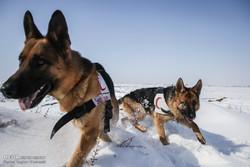 تربیت سگ های امدات و نجات
