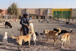 طرح جمع آوری سگ های ولگرد در صالحیه در دستور کار قرار دارد