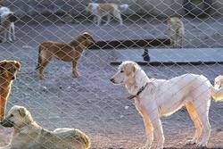 بهرهبرداری از پناهگاه نگهداری از سگهای ولگرد در انزلی/ ساماندهی سگها دغدغه مردم بود