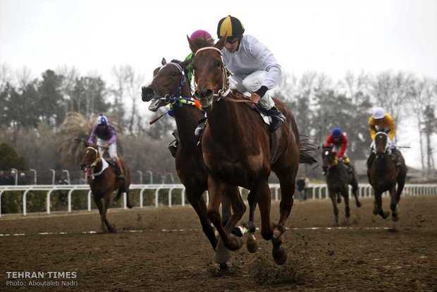 Horse-riding competition in Gonbad