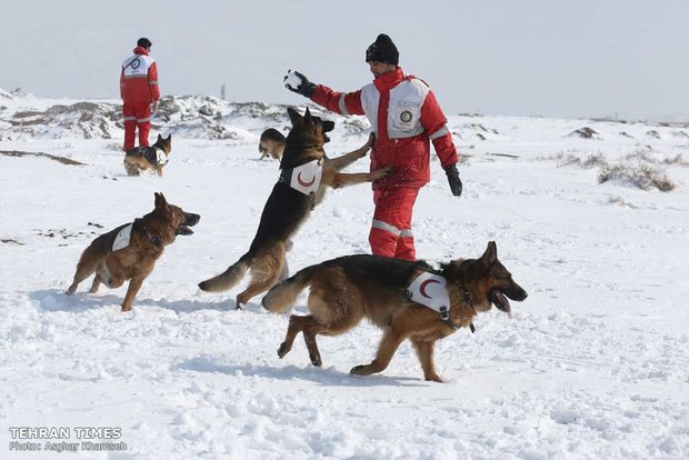 Red Crescent sniffing dog training camp