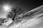 آخرین نفس های زمستان