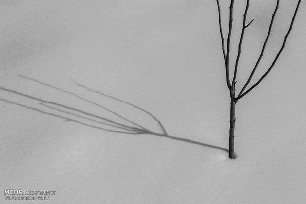Kışın son nefesleri