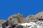 مشاهده پلنگ ایرانی در منطقه خنار آرادان