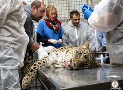Wildlife conservation breeding in Iran (photo by Farnaz Heidari)