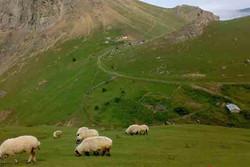 شناسایی ۶۲ کانون آسیب زا در عرصه های طبیعی استان ایلام
