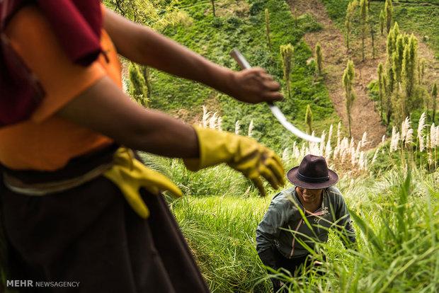 زندگی روستایی در اکوادور