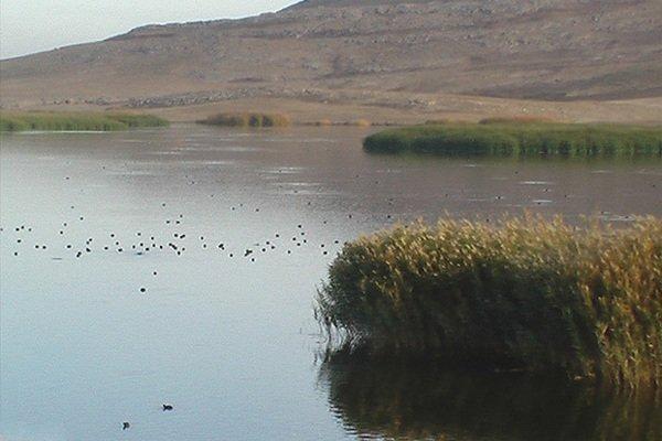 مدیرکل محیطزیست: حدود 30 درصد جازموریان حوزه سیستان و بلوچستان آبگیری شده است