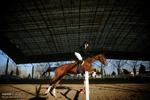 مسابقات پرش اسب در گرگان