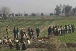 بالصورة استسلام العشرات من مسلحي داعش