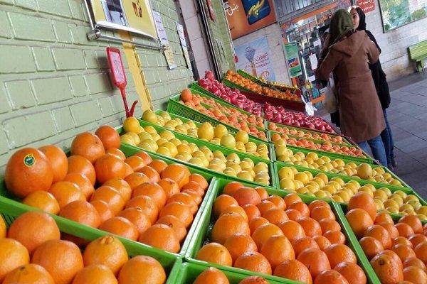 توزیع پرتقالهای مصری هنوز آغاز نشده/عرضه گسترده میوههای قاچاق