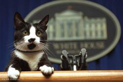 علاقه روسای جمهور آمریکا به سگ و گربه