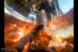 السمك الأحمر ضيف عيد النيروز /صور