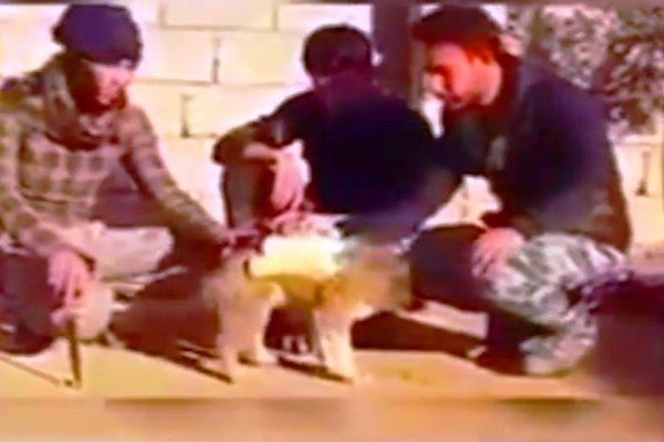 فیلم/کشف سگ بمبگذاری شده داعش در «نینوا»!
