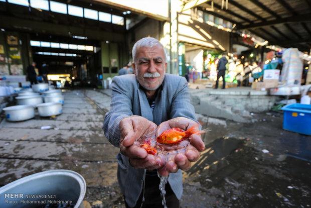 السمك الأحمر ضيف عيد النيروز