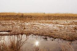 آبگیری ٦هزار هکتار از تالاب بندعلیخان در زمستان امسال