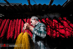 A man carries bundles of newly dyed threads at a traditional workshop in the northwestern city of Zanjan, February 23, 2017.