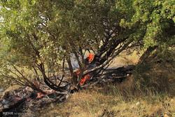 تصرف و تخریب مراتع از چالش های منابع طبیعی است