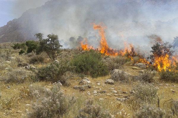 خسارت گسترده آتشسوزی در دشتستان/ کشاورزان و عشایر حمایت شوند