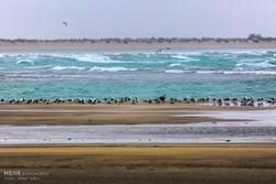 یک گام تا نهاییسازی برنامه مدیریت تالابهای خورباهو و خلیج گواتر