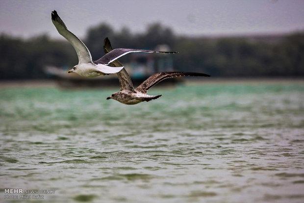 Gwadar Bay