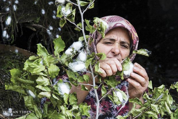 Simple life, skillful hands, silk weaving