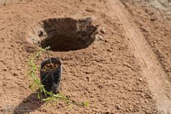 آموزش عملی و تئوری هرس درختان میوه به باغداران