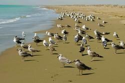 ساحل روستای گردشگری «درک» از زباله پاکسازی شد