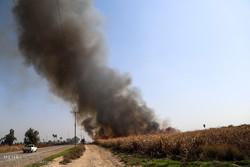 آتش زدن مزارع قبل از برداشت نیشکر