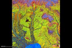 تصاویر رنگارنگ از سطح زمین
