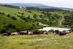 رفع تصرف ۲۷۸ هزار مترمربع از اراضی ملی در خراسان رضوی