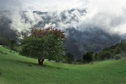جنگل ابر