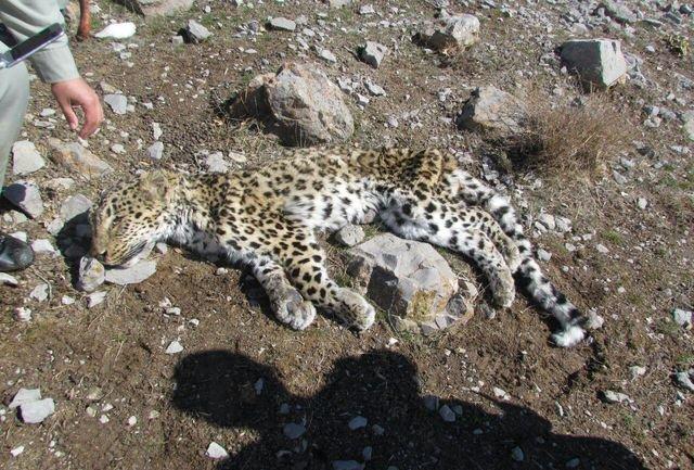 دستگیری شکارچی پلنگ و گرگ در خراسان شمالی,