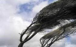 وزش باد شدید در استان کرمانشاه/توصیههای هواشناسی به کشاورزان