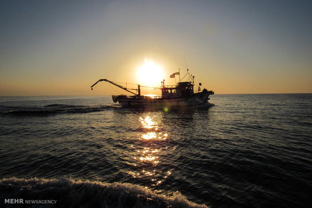 صید ماهی کیلکا در دریای خزر
