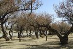 صادرات خاک های مرتعی و جنگلی به هر طریقی غیرقانونی است