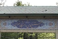 کوی دانشگاه تهران