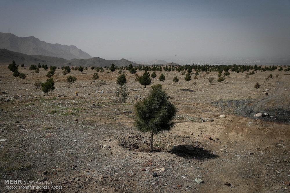 طرح جنگل کاری بنیاد برکت