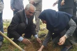 پدر بلوط ایران ۱۰۰۰ اصله نهال را به دانشگاه آزاد خرمآباد هدیه کرد