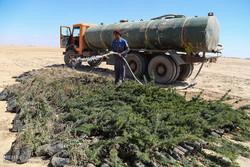 کاشت 250 هزار نهال در خوزستان