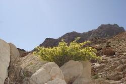 خشکسالی و اثرات مخرب آن بر پیکره بی جان منابع طبیعی در مهرستان