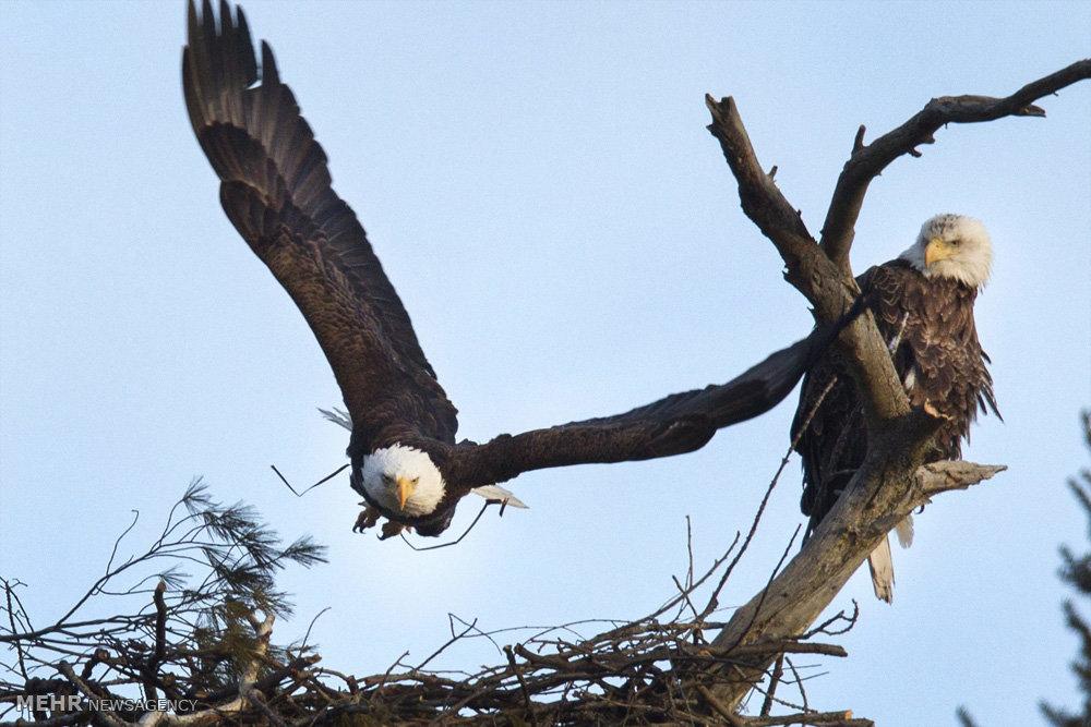 تصاویر محیط زیست منتخب هفته