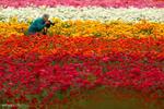 برترین تصاویر جهان ۱ فروردین ۹۶