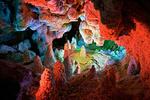 «نخجیر» تابلوی شگفتیآور تاریخ ۷۰میلیون ساله
