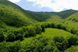 راهاندازی اقامتگاههای جنگلی در اردبیل نیازمند مطالعه است
